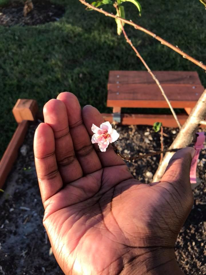 Gardenoir_benny_flower